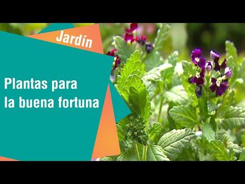 Plantas tradicionales para la buena fortuna | Jardín