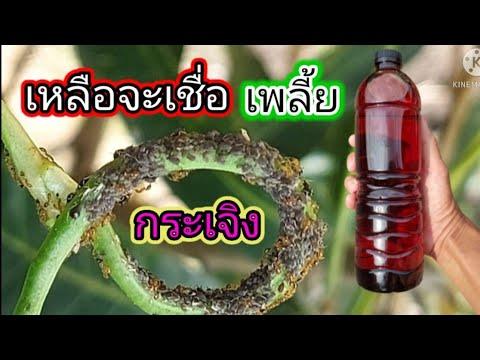 น้ำยา-กำจัด-เพลี้ย-แมลงศัตรูพื