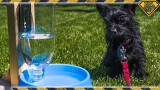 DIY Self Filling Pet Water Bowl