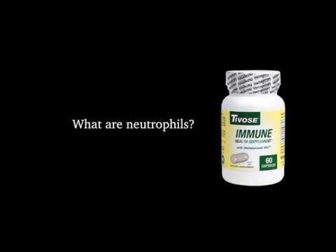 Neutrophils - Tivose Maitake Mushroom Immune Health Supplement