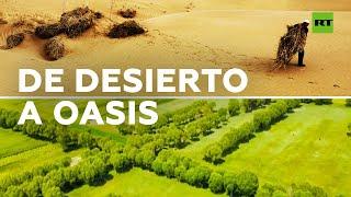 Un desierto de China se convierte en un oasis tras 60 años