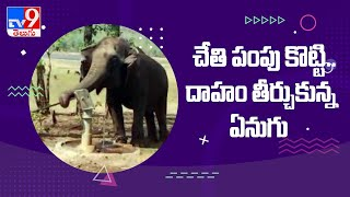 Elephant operates hand pump on own to Drink water at Maharashtra's - TV9 - TV9
