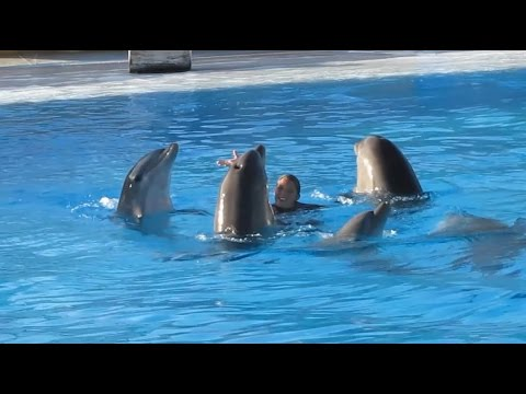 Video: Dolphins - They are considered one of the most intelligent animals on Earth, and some tribe