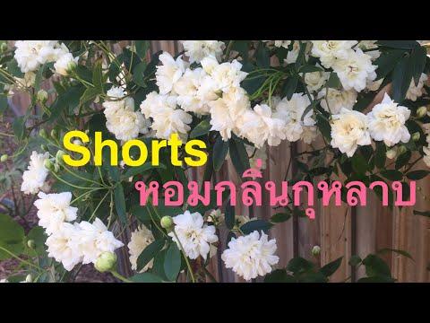 Shorts-หอมกลิ่นกุหลาบ