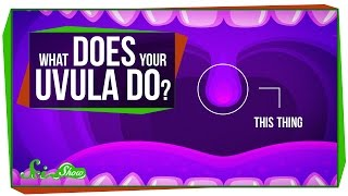 What Does Your Uvula Do?