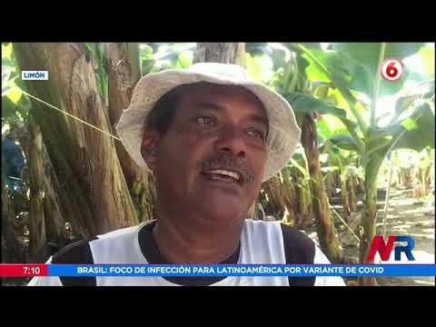 Preocupación por aparición de animales muertos en Río Bananito en Limón