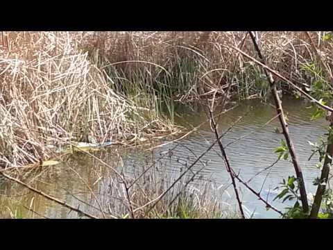 ширван канал рыбалка
