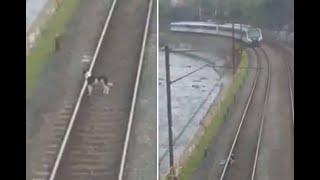 La angustia de pasajeros del metro de Medellín por perro que estuvo a punto de ser arrollado