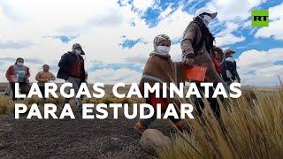 Niños de Perú caminan decenas de kilómetros por el altiplano para ir a clase