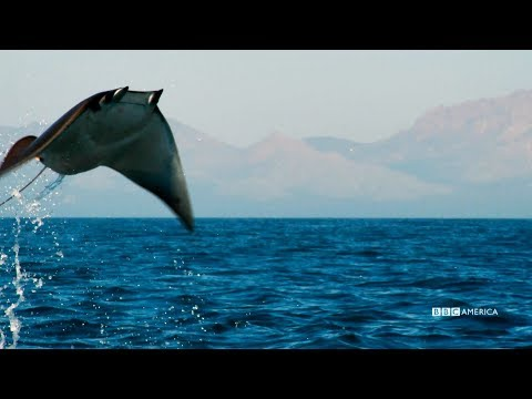 Jump for Joy | Planet Earth: Blue Planet II | Premieres Saturday, January 20 @ 9/8c on BBC America