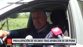 Puma permaneció horas en el techo de una casa en el Maule | 24 Horas TVN Chile
