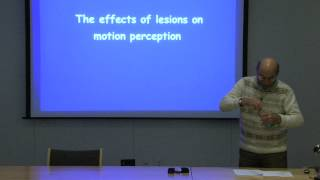 12. Motion perception and pursuit eye movements