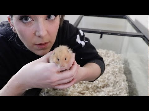 connectYoutube - Giving My Hamster A Home Makeover