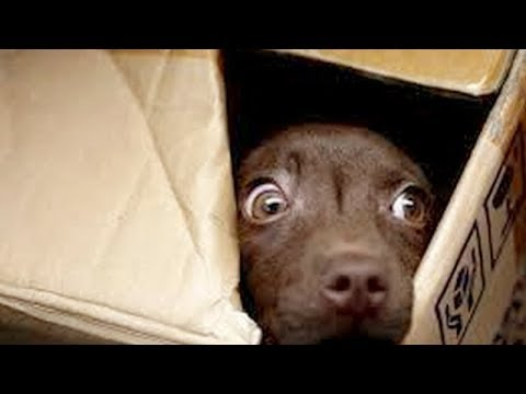 FUNNIEST home VIDEOS COMPILATION! - Make your day AWESOME by watching our stuff!