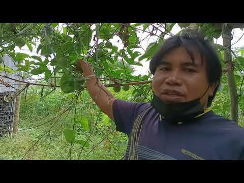 EP2.เกษตรพอเพียงใจกลางอุตสาหกร