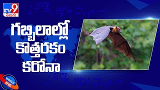 Chinese researchers find batch of new Coronaviruses in Bats - TV9 - TV9