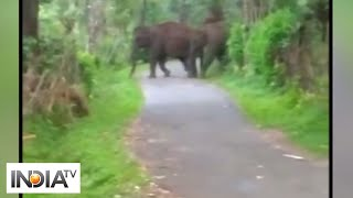 Watch: Herd of elephants crossing Somwarpet-Kushalnagar Highway in Karnataka - INDIATV