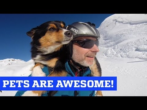 People Are Awesome & The Pet Collective present: Pets are Awesome!