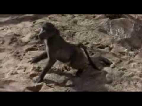 Video: Gyvūnai - Nemažai kuo skiriasi nuo žmonių