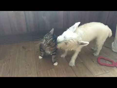 connectYoutube - Dog won't leave cat alone
