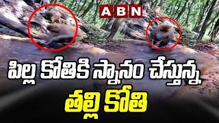 Viral Video: పిల్ల కోతికి స్నానం చేస్తున్న తల్లి కోతి    Mother Monkey Bathing Her Child    ABN - ABNTELUGUTV