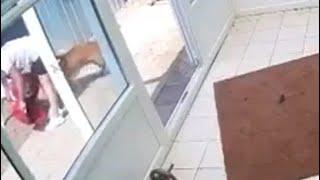 कुत्ते ने खाना खाने वाले बर्तन के होल्डर में फंसा ली गर्दन - NDTVINDIA