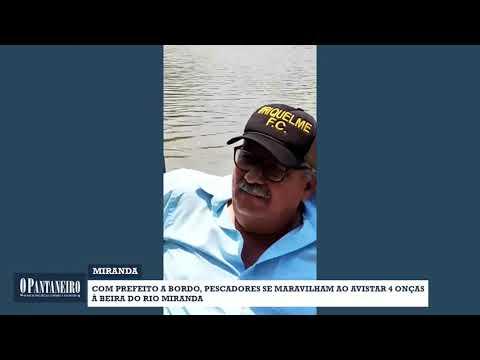 Com prefeito a bordo, pescadores se maravilham ao avistar 4 onças à beira do Rio Miranda