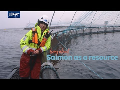 Lerøy about salmon as a resource