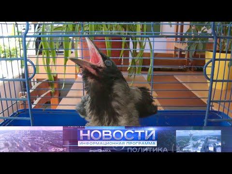 """Информационная программа """"Новости"""" от 17.06.2021"""