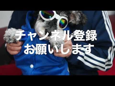 動画 うー ちゃん
