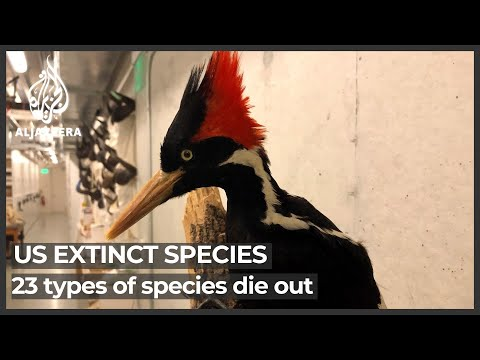US to declare 23 types of birds, fish and other species extinct