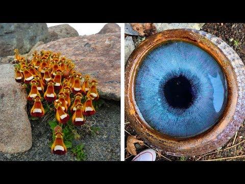 Предметы, Чей Уровень Маскировки Обманет Даже Ваш Зоркий Глаз