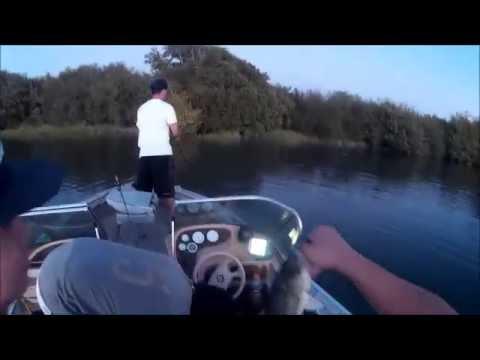 Sacramento river striped bass fishing collins lake for Knights landing fishing report