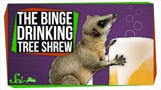 This Binge-drinking Tree Shrew Could Probably Outdrink You