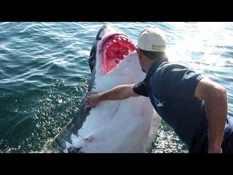 Акула стала другом человека? Реальная история из жизни