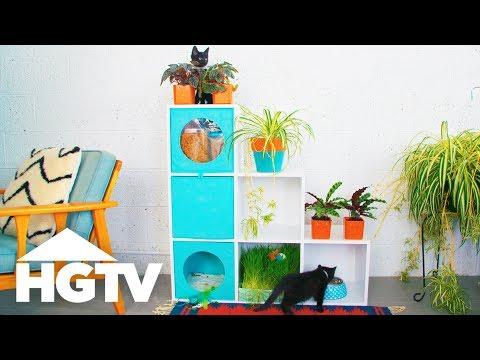 How to Create a Cat-Friendly Indoor Garden - Way to Grow - HGTV