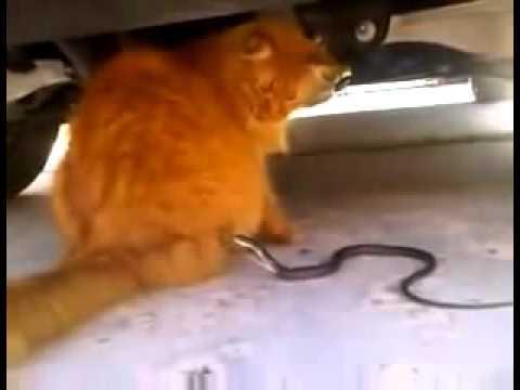 Video: Ir gyvūnai - Megsta paprikolint vieni iš kitų.