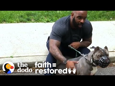 Watch This Guy Slowly Win Over His Rescue Dog Who Was Scared Of Men   The Dodo Faith = Restored