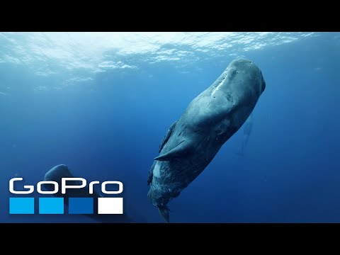 GoPro VR: Diving with Sperm Whales in Mauritius