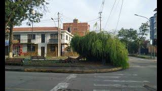 Otro árbol cae en Cochabamba a causa de las lluvias