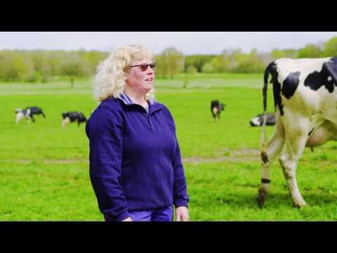 Längre sommarlov för skånska kor