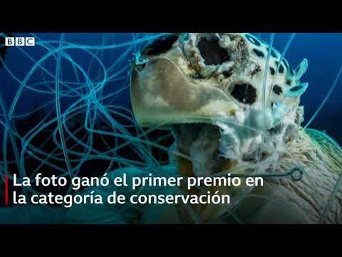 La impactante imagen de tortuga muerta enredada en cordel de pescar que ganó un premio de fotografía