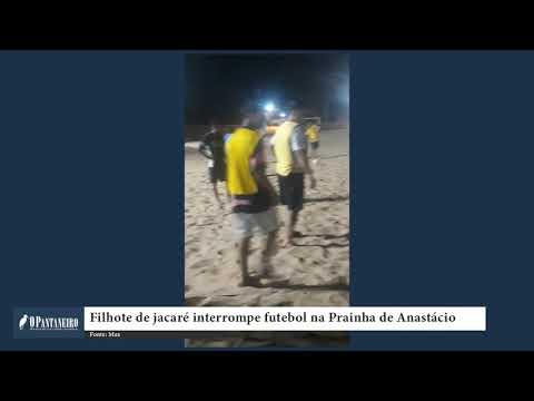 Filhote de jacaré interrompe futebol na Prainha de Anastácio