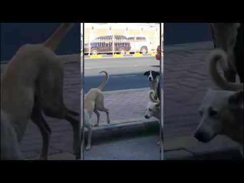 الكلاب الضالّة «تتمادى» وتقتحم «الدبلوماسية»