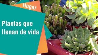 Plantas que llenan de vida la casa