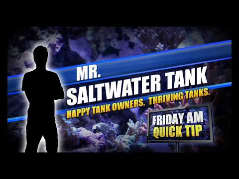 The Utility of Spying On Your Fish [Friday AM Quick Tip]