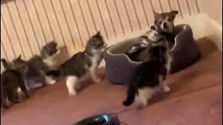 Dog Overwhelmed By Curious Kittens In Adorable Video - NDTV