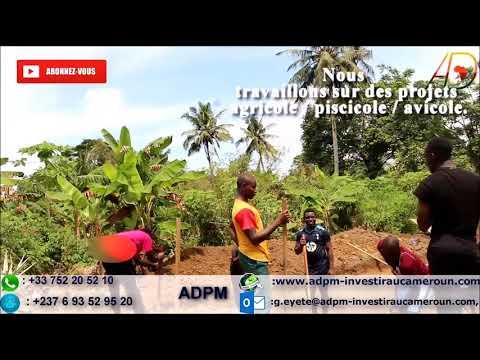Comment réussir au Cameroun : Business pisciculture : part 1