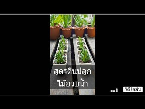 สูตรผสมดินปลูกพืชอวบน้ำ-(ไม่ใช