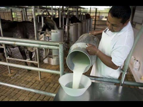 El Salvador bloquea exportaciones lácteas provenientes de Nicaragua